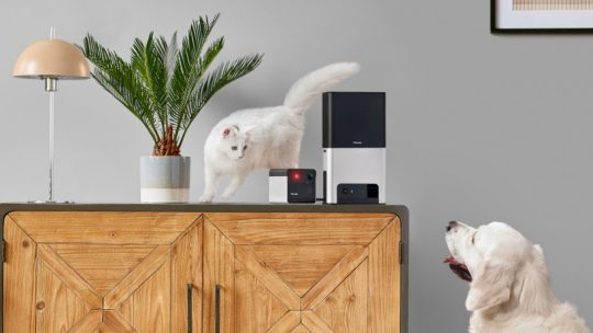 Petcube adds Alexa to its latest treat-dispensing, laser-firing pet cameras